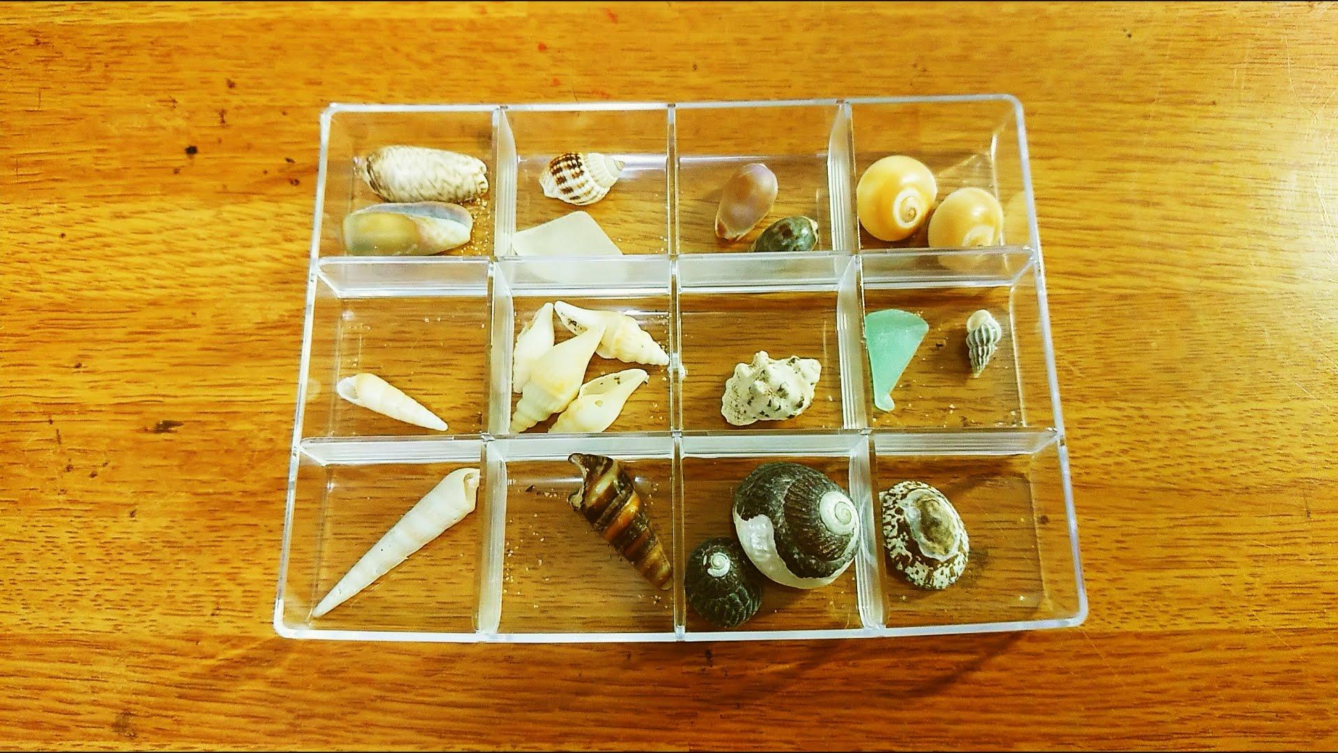 分類した貝殻