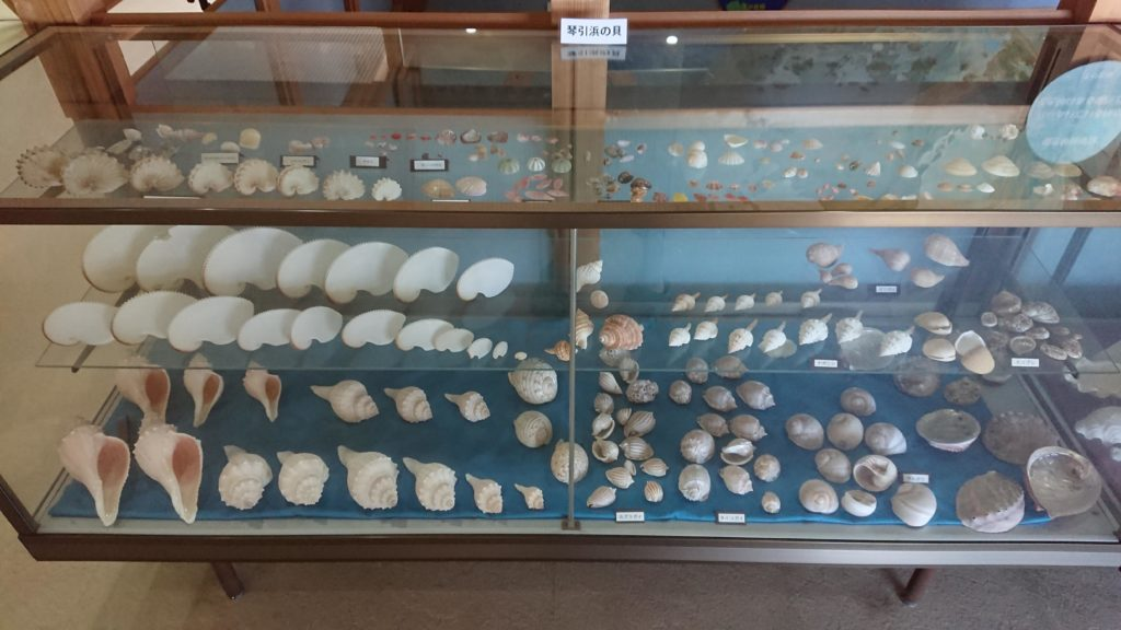 琴引浜の貝殻