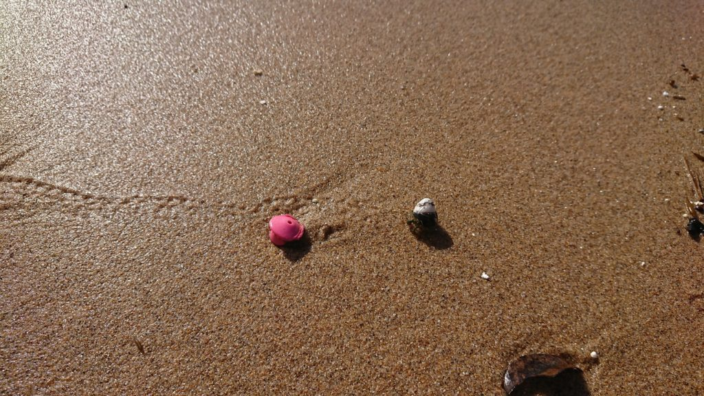 琴引浜の砂浜にいるヤドカリ