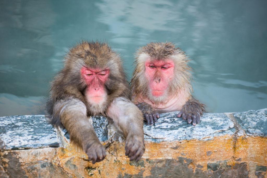 温泉につかる二匹の猿