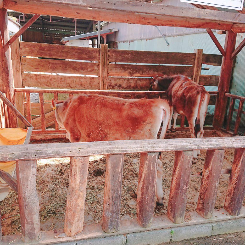 ミルク皇后SORAの入り口付近の牛