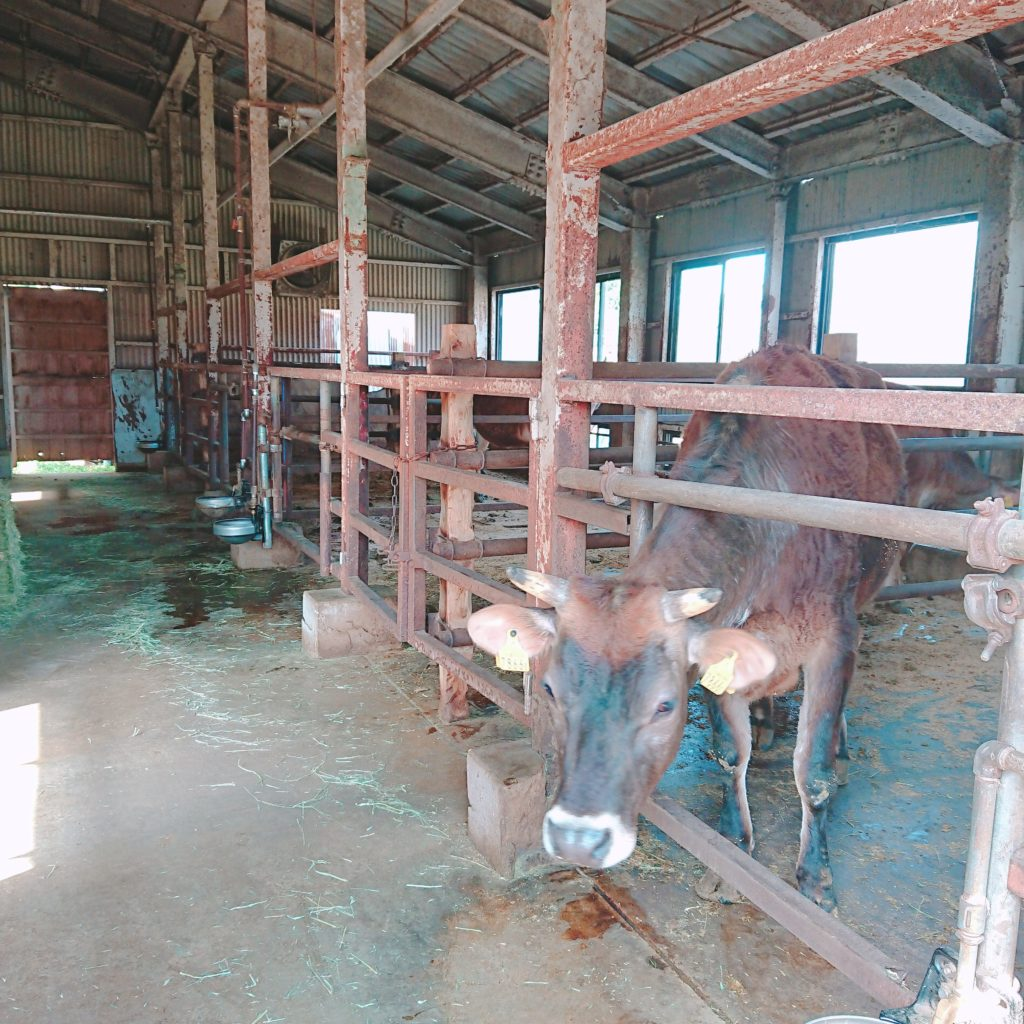 ミルク工房SORAの牛舎
