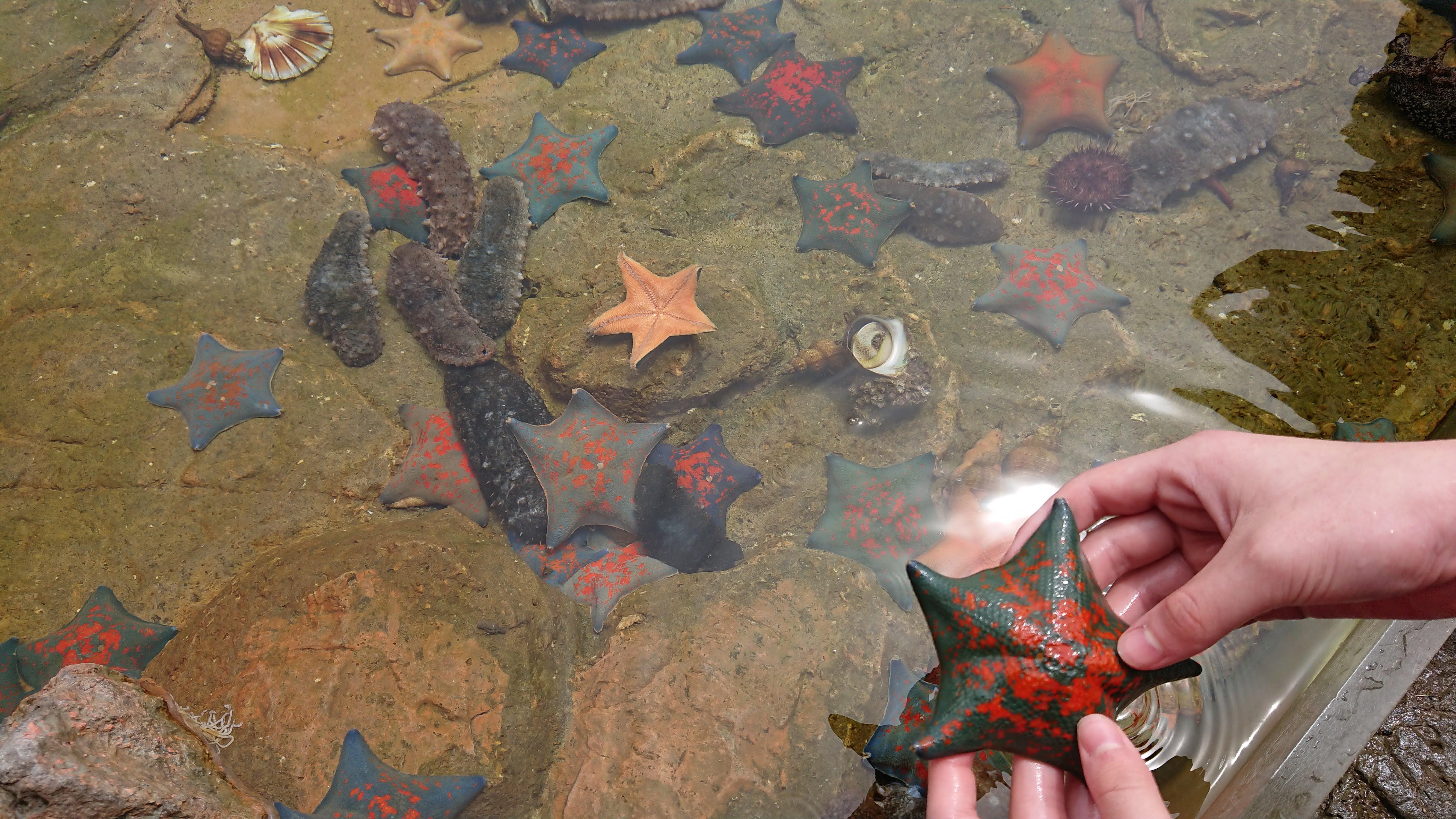 「魚っ知館」のタッチングプールでヒトデを触っている