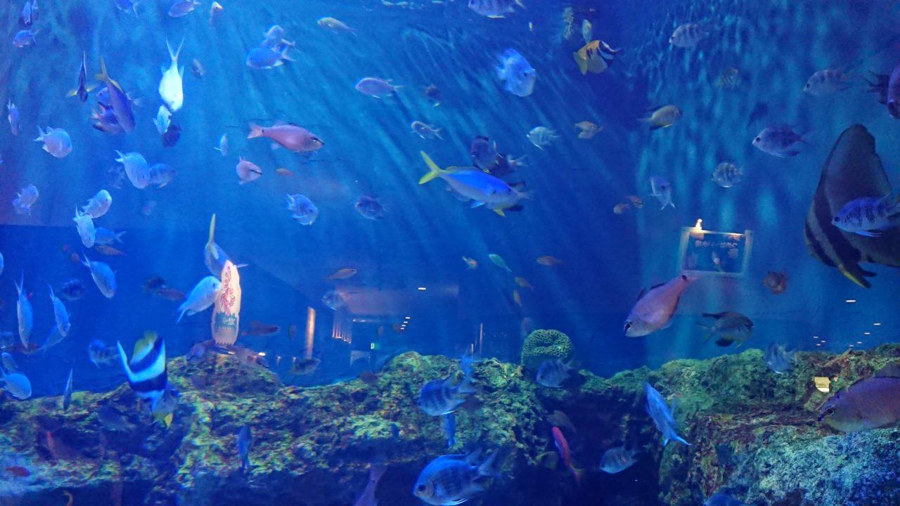 「魚っ知館」の水槽