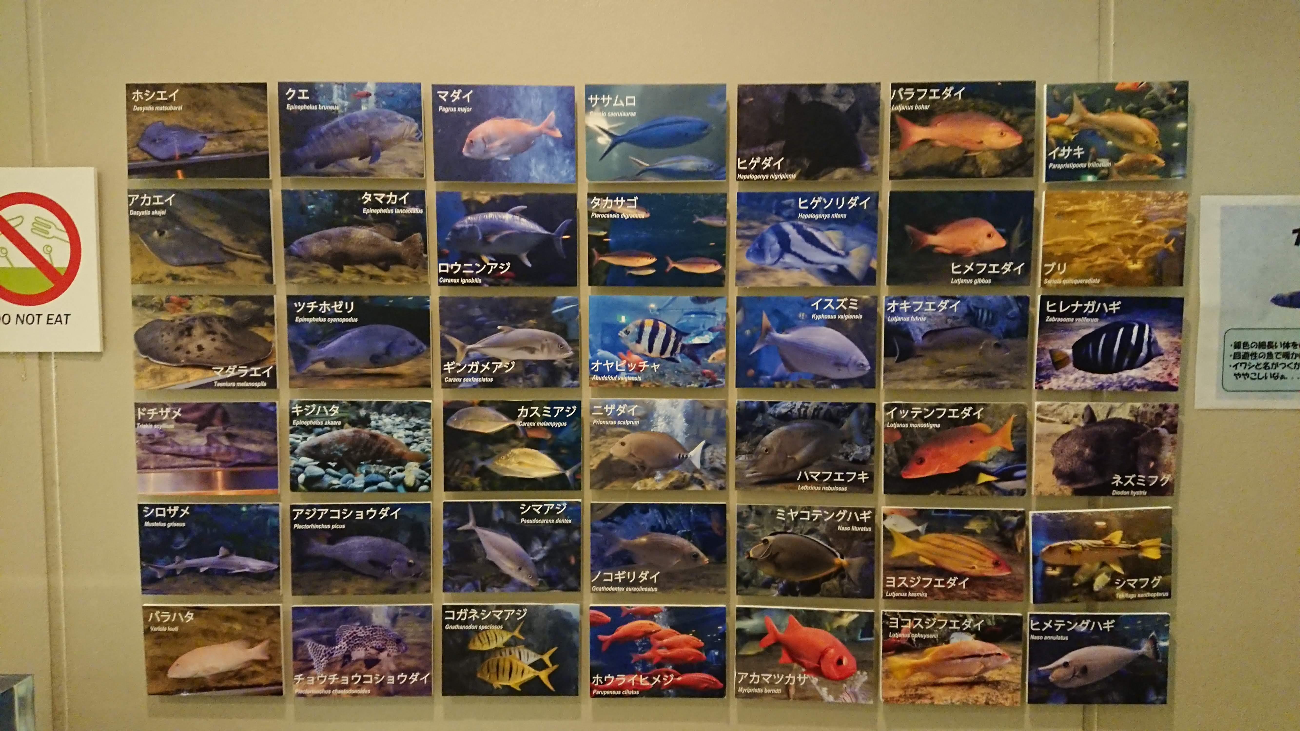 「魚っ知館」の水族館