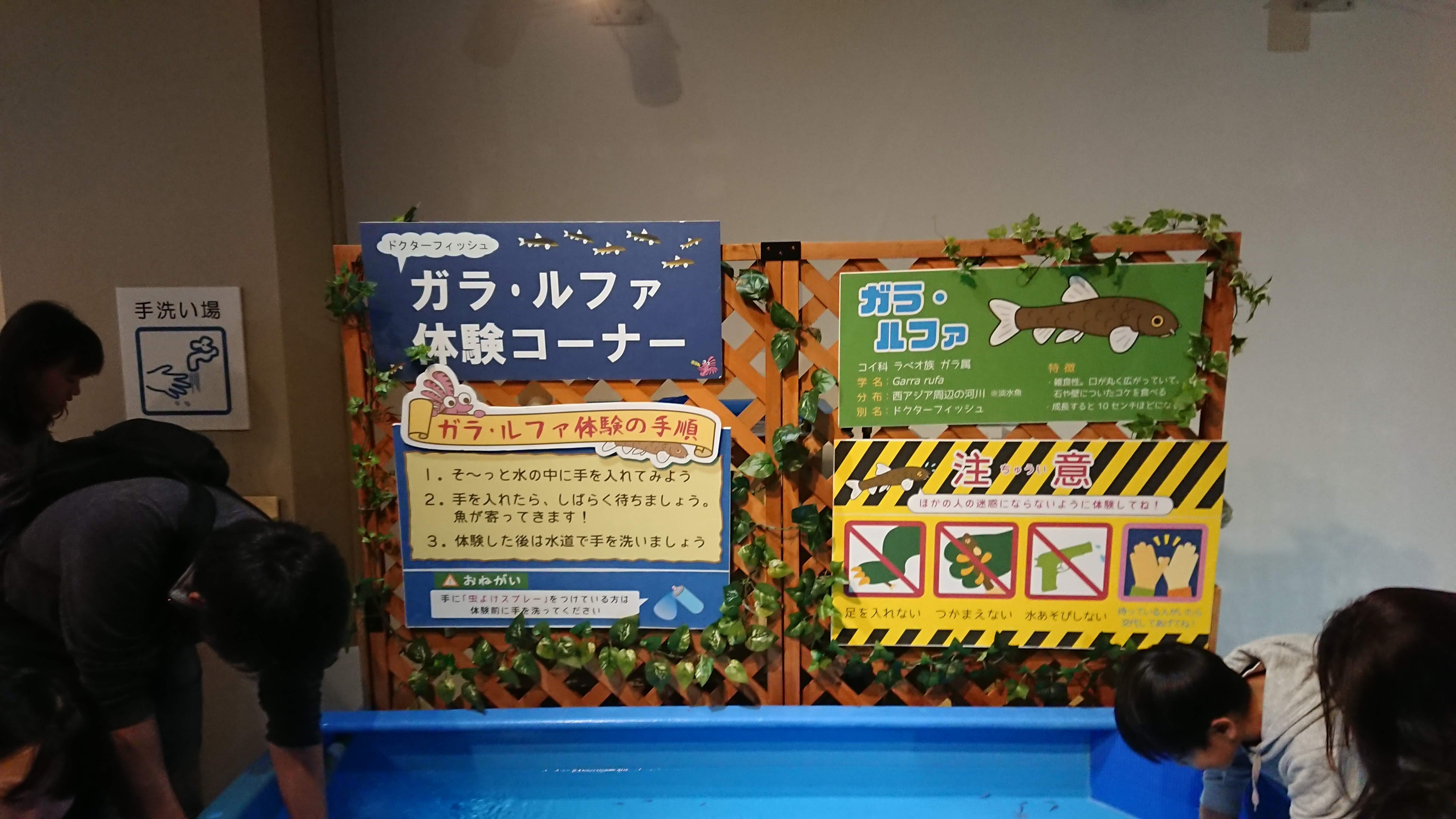 「魚っ知館」のガラ・ルファ体験コーナー