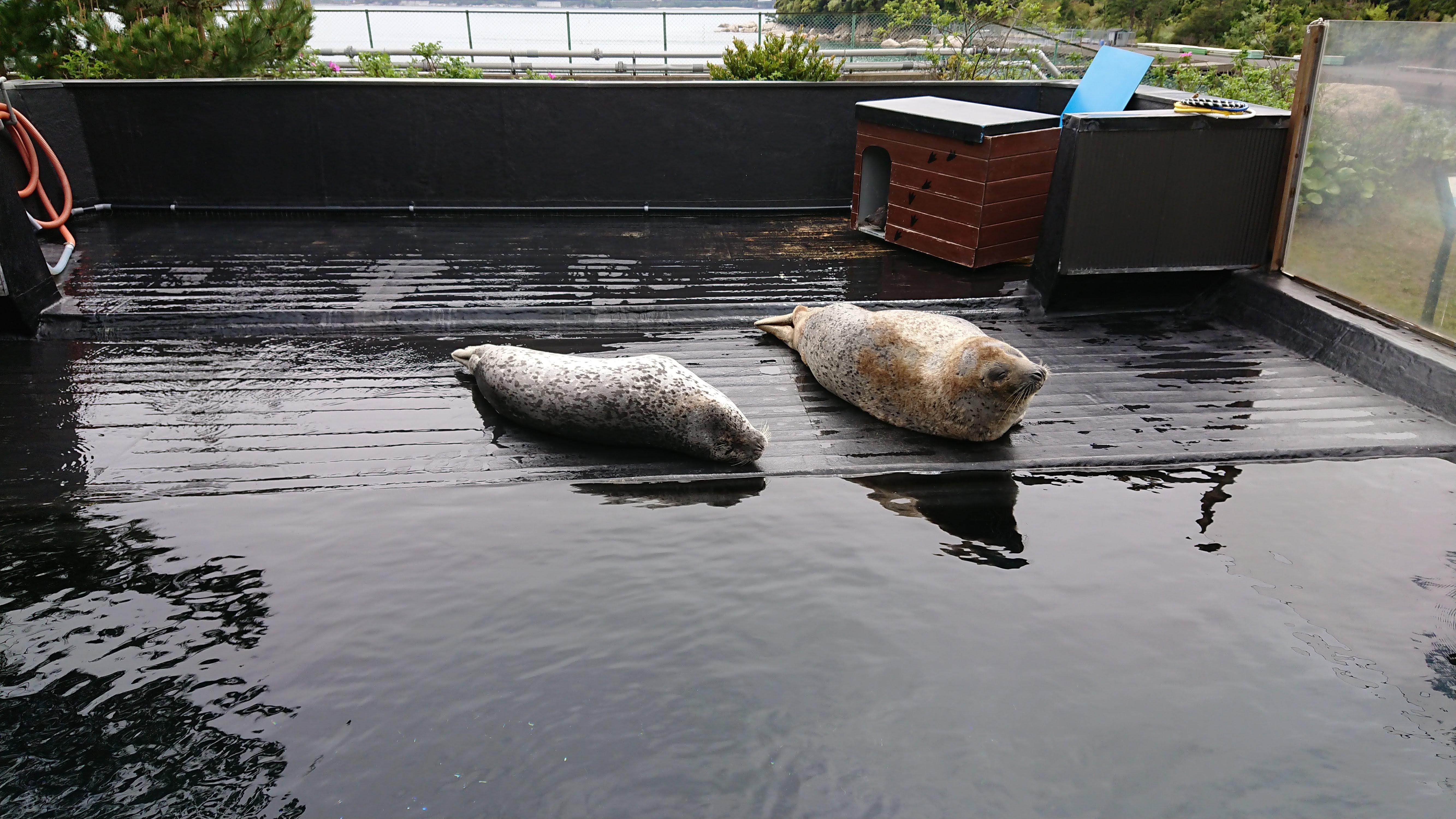 「魚っ知館」のアザラシ