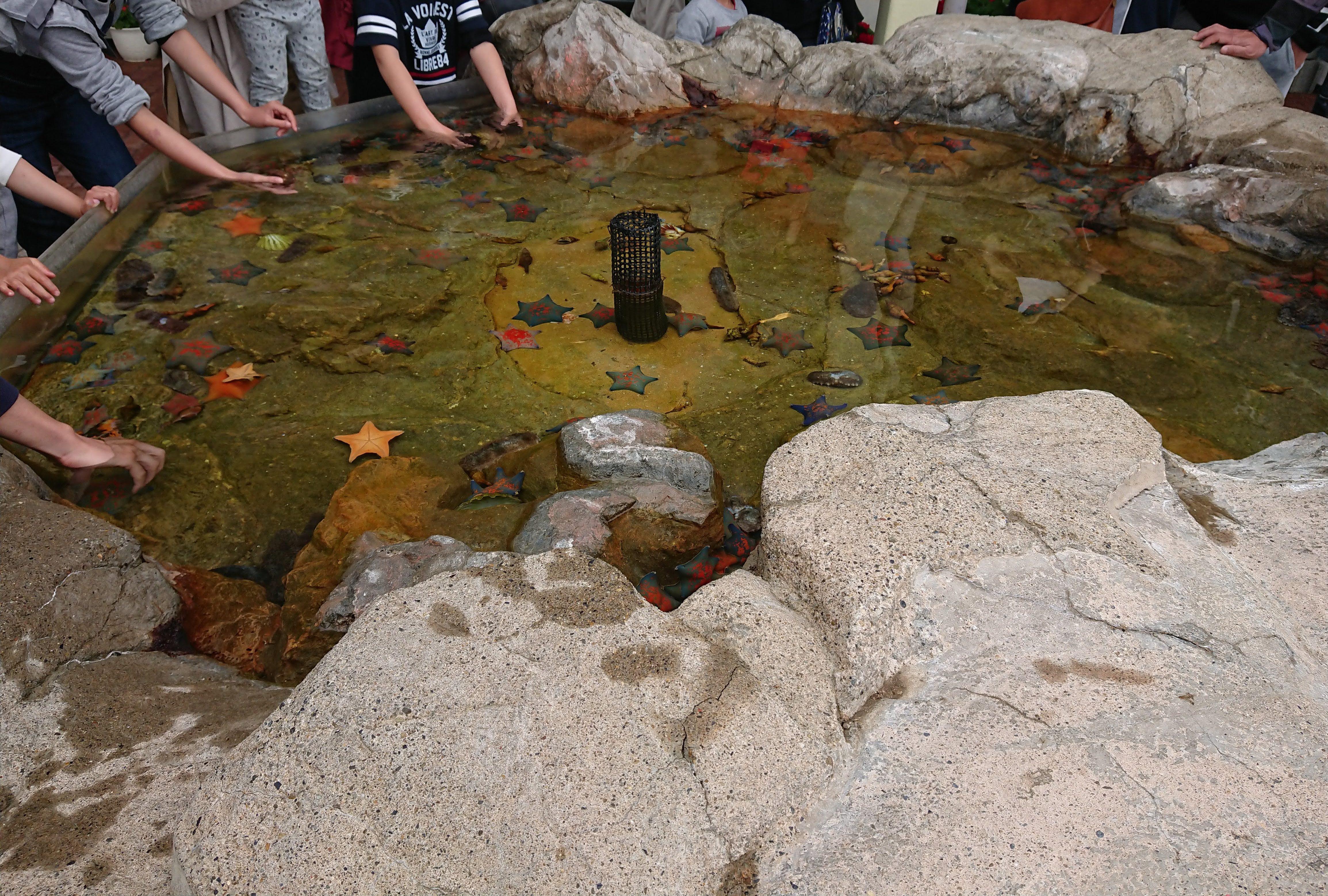 「魚っ知館」のタッチングプール