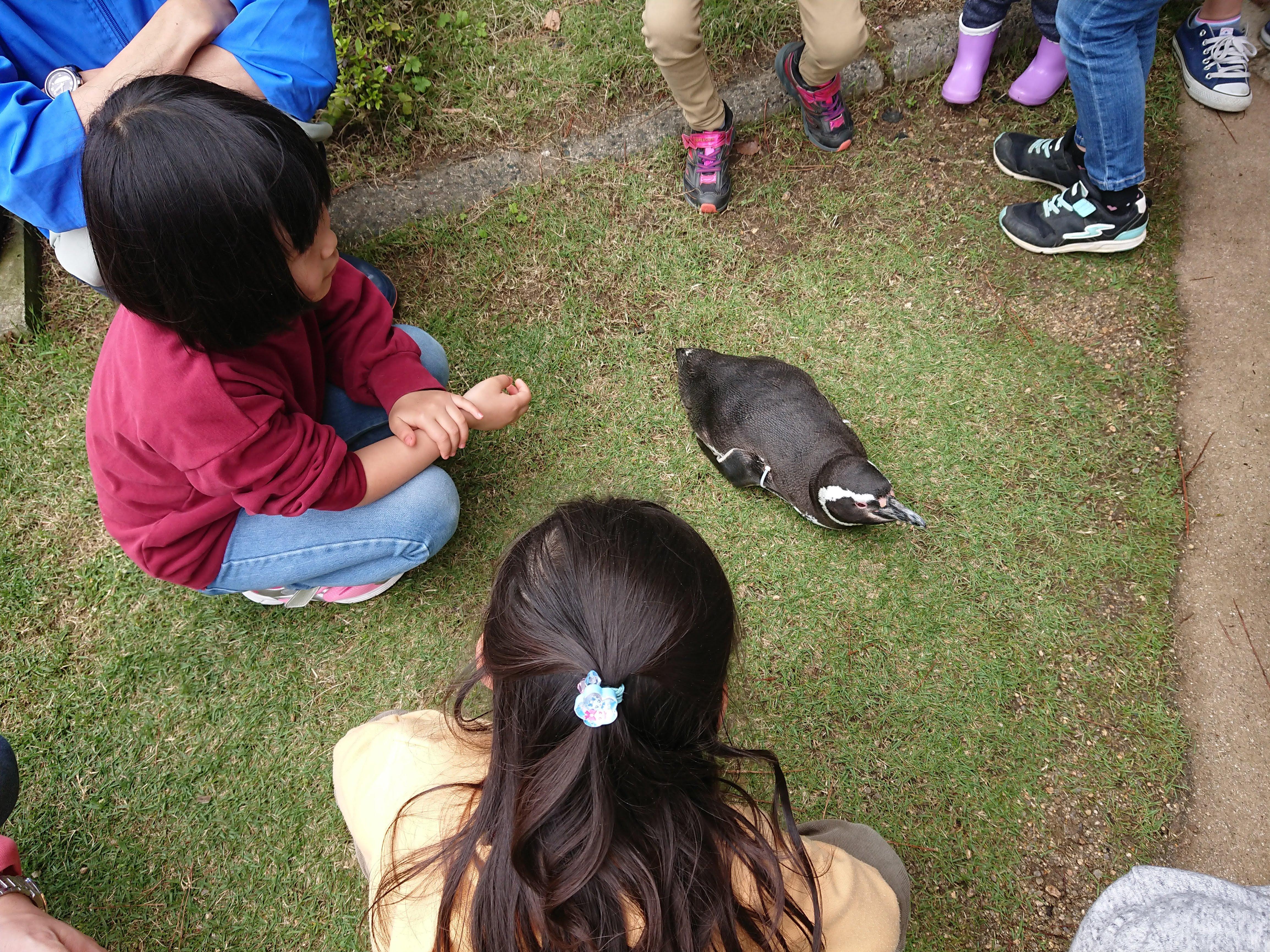 「魚っ知館」のペンギン